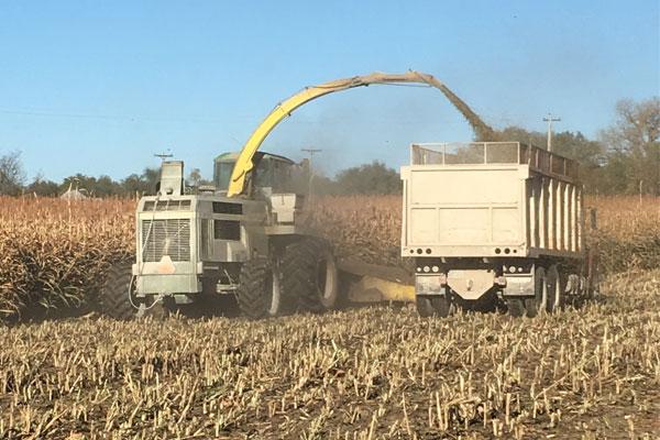 Forage Harvesting - Dix Angus - Angus Cattle in Northwest Kansas